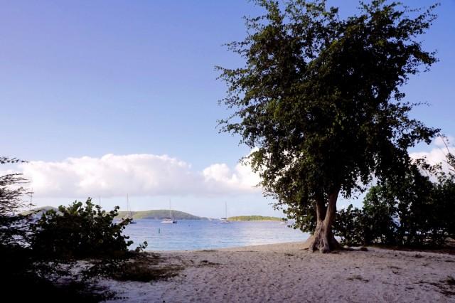 Zdjęcia: Wyspa Świętego Jana, Karaiby, Plaża Honeymoon, WYSPY DZIEWICZE STANÓW ZJEDNOCZONYCH