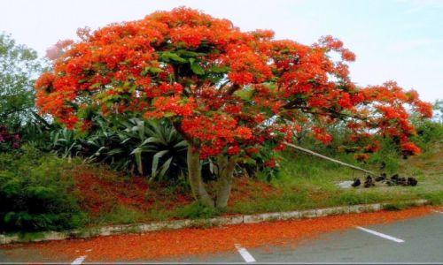 Zdjęcie WYSPY DZIEWICZE STANÓW ZJEDNOCZONYCH / Karaiby / St.Thomas / Purpurowa krolowa
