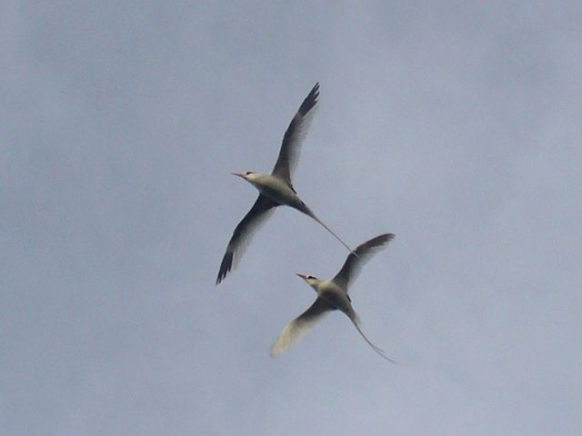 Zdjęcia: między Karaibami a Azorami, Atlantyk, Parka, WYSPY KARAIBSKIE