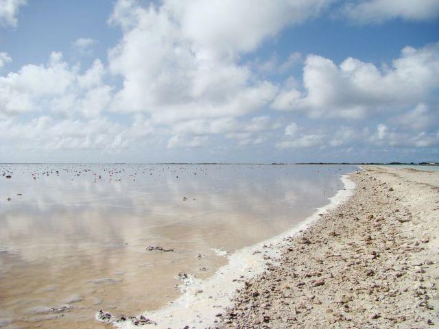 Zdjęcia: Bonaire, słone jezioro, WYSPY KARAIBSKIE