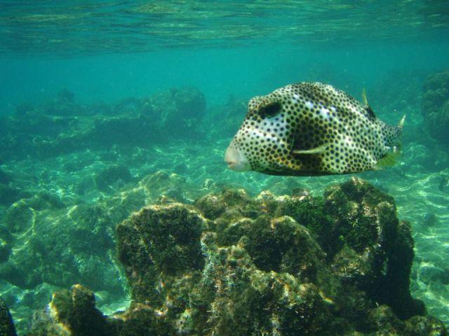 Zdjęcia: Washington Slagbaai National Park, Bonaire, brzydal, WYSPY KARAIBSKIE