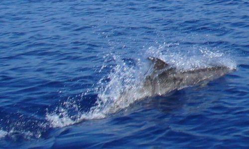 Zdjęcie WYSPY KARAIBSKIE / Atlantyk / między Karaibami a Azorami /