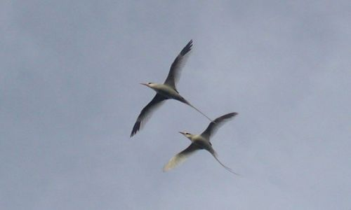 Zdjęcie WYSPY KARAIBSKIE / Atlantyk / między Karaibami a Azorami / Parka