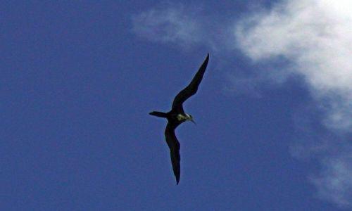 Zdjęcie WYSPY KARAIBSKIE / Morze Karaibskie / Martynika / Fregata