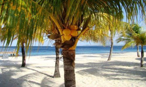 Zdjecie WYSPY KARAIBSKIE / Bonaire / brak / piasek i palmy