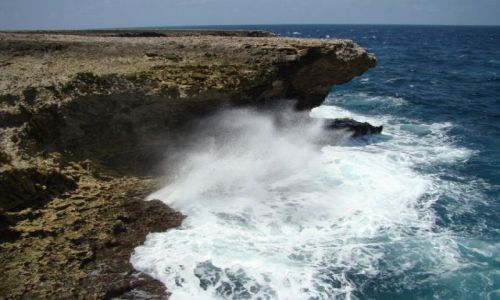 Zdjęcie WYSPY KARAIBSKIE / Bonaire / Washington Slagbaai National Park / nad brzegiem morza 5