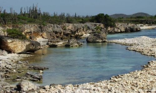 Zdjęcie WYSPY KARAIBSKIE / Bonaire / Washington Slagbaai National Park / nad brzegiem morza 10