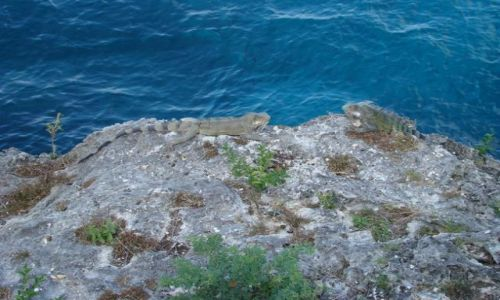 Zdjecie WYSPY KARAIBSKIE / Curacao / brak / nad wodą