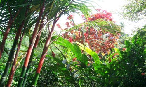 Zdjęcie WYSPY KARAIBSKIE / Antyle Francuskie / Ajoupa-Bouillon / Karaibskie klejnoty 2