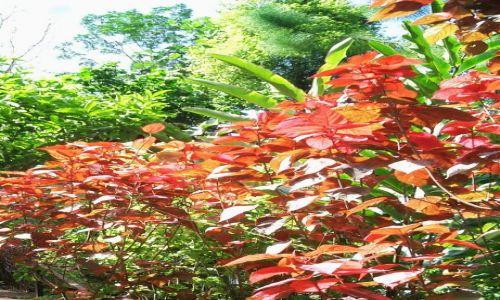 Zdjęcie WYSPY KARAIBSKIE / Antyle Francuskie / Ajoupa-Bouillon / Karaibskie klejnoty 6