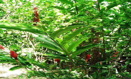 Zdjęcie WYSPY KARAIBSKIE / Antyle Francuskie / Ajoupa-Bouillon / Karaibskie klejnoty 7