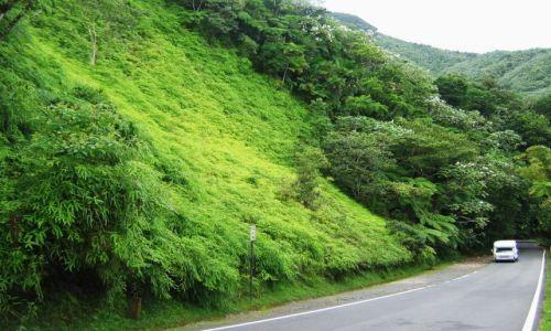 Zdjęcie WYSPY KARAIBSKIE / Brytyjskie Wyspy Dziewicze / Tortola / Droga przez dżunglę
