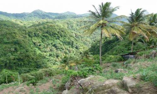 Zdjęcie WYSPY KARAIBSKIE / Małe Antyle / Santa Lucia /  las deszczowy