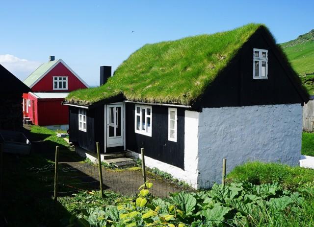 Zdjęcia: Mykines, Sørvágur, Rabarbar, najpopularniejsza uprawa, WYSPY OWCZE