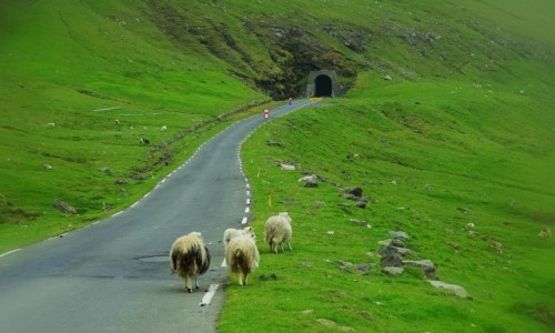 Zdjęcie WYSPY OWCZE / Wyspa Kalsoy / Trøllanes / Na drodze do tunelu