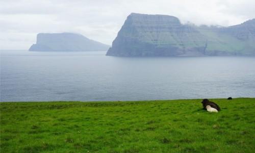 Zdjęcie WYSPY OWCZE / Wyspa Kalsoy / Trøllanes  / Siesta