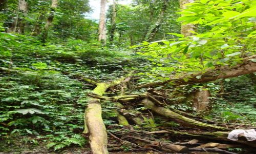 Zdjęcie WYSPY SALOMONA / Pacyfik, Oceania / Guadalcanal / Piekło (?) salomońskiej dżungli