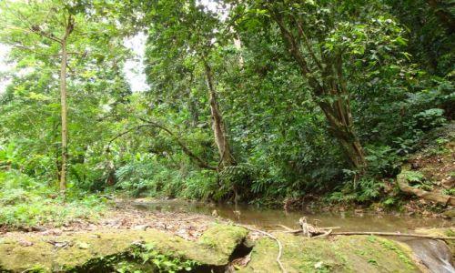 Zdjęcie WYSPY SALOMONA / Pacyfik, Oceania / Guadalcanal, przedmieścia Honiary / Bujna zieleń Salomonów...