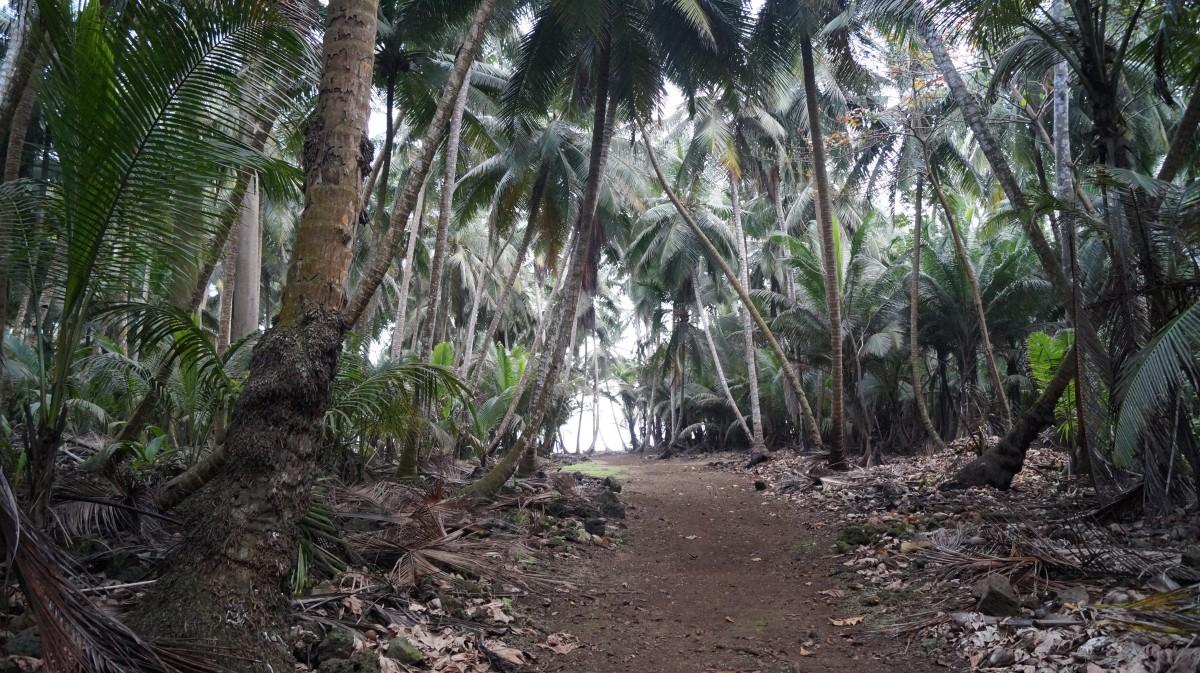 Zdjęcia: Południowy kraniec wyspy, Ilheu Das Rolas, Droga na plażę, WYSPY ŚWIĘTEGO TOMASZA i KSIĄŻĘCA