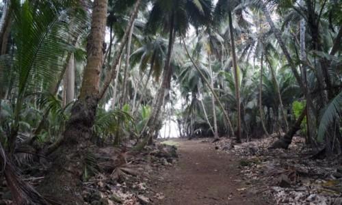Zdjecie WYSPY ŚWIĘTEGO TOMASZA i KSIĄŻĘCA / Ilheu Das Rolas / Południowy kraniec wyspy / Droga na plażę