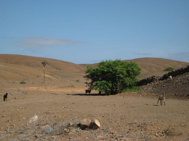 Zdjęcia: między SM a Espargos, sali, pustynia, Wyspy Zielonego Przylądka