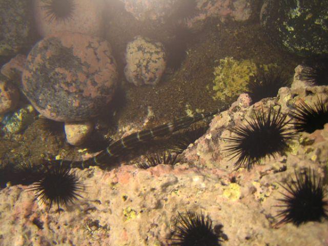 Zdj�cia: Calheta, Santiago, morskie �yj�tka, Wyspy Zielonego Przyl�dka