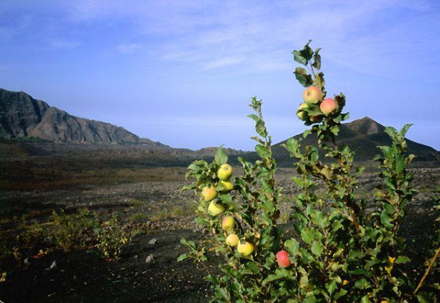 Zdjęcia: Portella, Fogo, mini plantacja, Wyspy Zielonego Przylądka