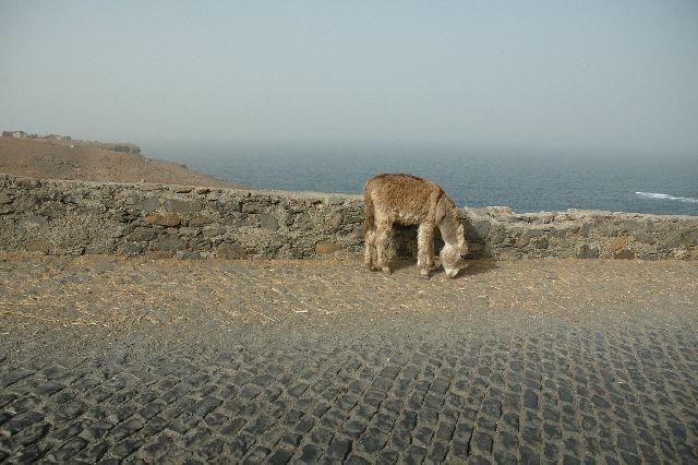 Zdjęcia: Santiago, osiołek z Cabo Verde, Wyspy Zielonego Przylądka