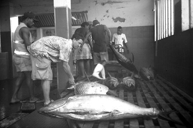 Zdjęcia: Mindelo, Sao Vincente, Ale ryby!, Wyspy Zielonego Przylądka