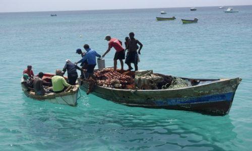 Zdjęcie WYSPY ZIELONEGO PRZYLĄDKA / Afryka / Wyspa Sal / Zielono mi :)