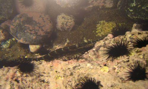 Wyspy Zielonego Przylądka / Santiago / Calheta / morskie żyjątka