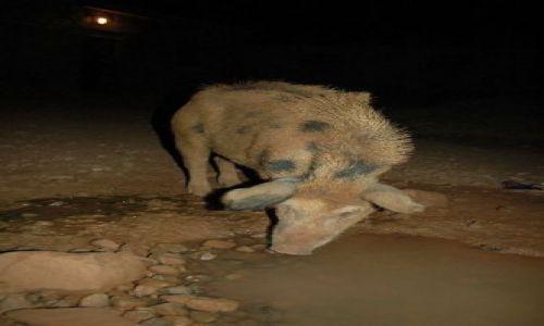 Zdjęcie Wyspy Zielonego Przylądka / brak / Santiago / nocne łowy