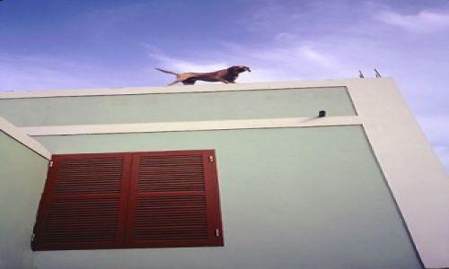 Wyspy Zielonego Przylądka / Sao Vincente / Mindelo / stróż