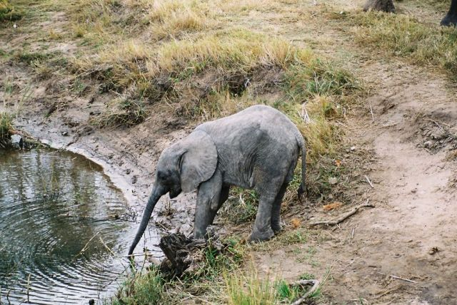 Zdjęcia: sawanna, Malec przy wodopuju, ZAMBIA