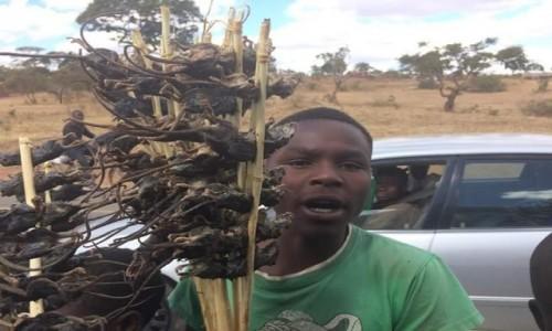 ZAMBIA / - / po drodze / przekąska przy drodze - myszy z grila