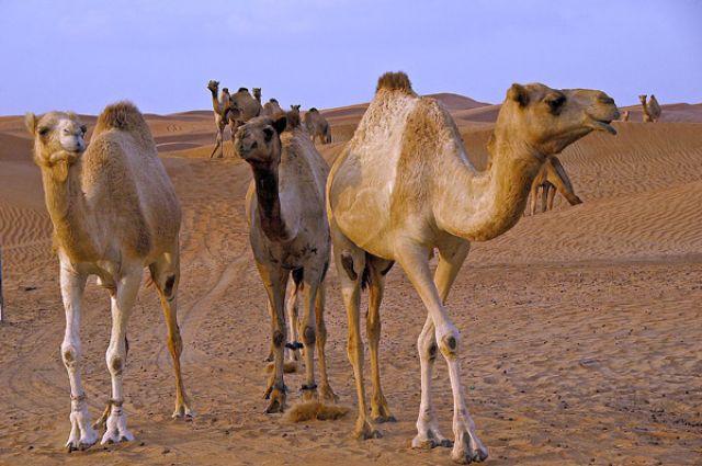 Zdjęcia: pustynia LAHBAB, Abu Dhabi,, ..., ZJEDNOCZONE EMIRATY ARABSKIE
