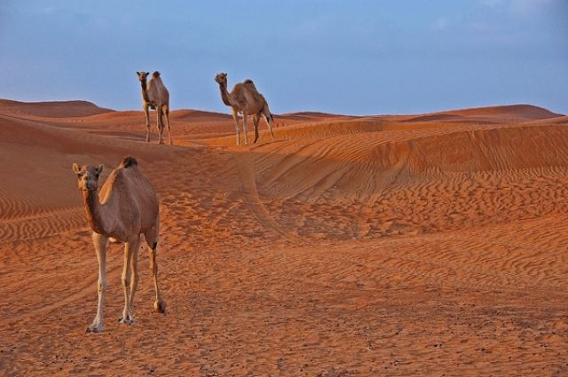 Zdj�cia: pustynia LAHBAB, Abu Dhabi,, ..., ZJEDNOCZONE EMIRATY ARABSKIE