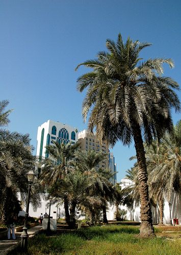 Zdjęcia: ABU DHABI, ABU DHABI, ,,,, ZJEDNOCZONE EMIRATY ARABSKIE