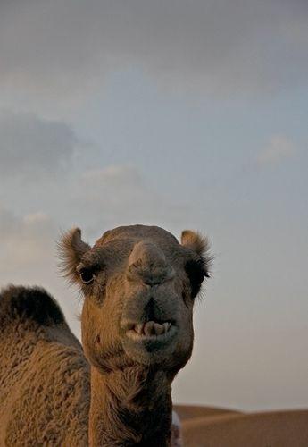 Zdjęcia: pustynia, Zatoka Perska, portrecik o zachodzie, ZJEDNOCZONE EMIRATY ARABSKIE