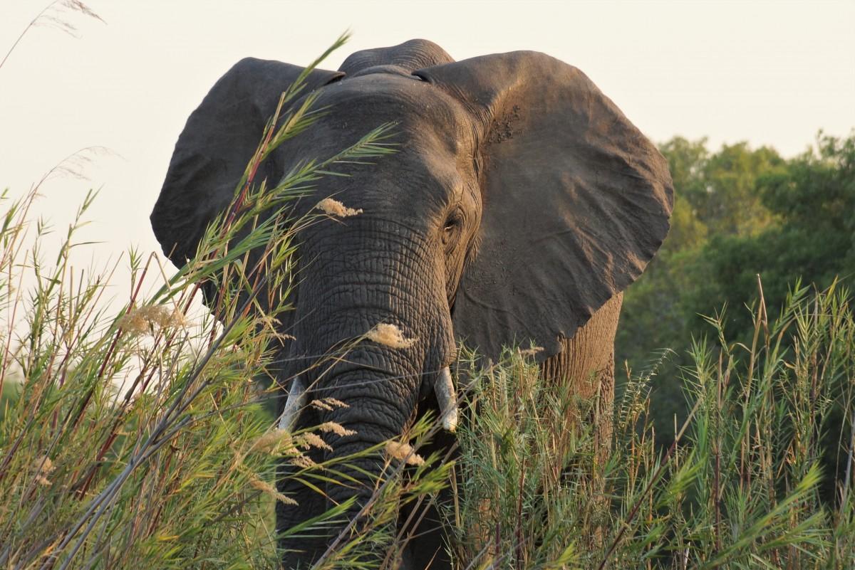 Zdjęcia: Antelope Park in Gweru, Słoń :), ZIMBABWE