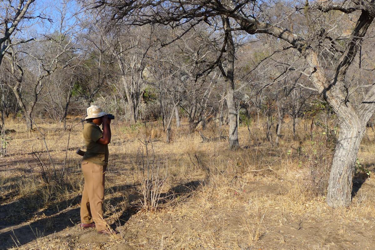Zdjęcia: Matobo Hills , Zachodnie Zimbabwe , Gdzie jesteś nosorożcu ?, ZIMBABWE