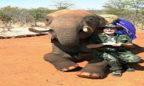 Zdjęcie ZIMBABWE / Victoria Falls / Victoria Falls National Park / Safari na słoniu