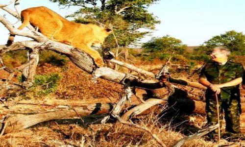 Zdjęcie ZIMBABWE / Victoria Falls / Victoria Fals National Park / Spacer z lwami