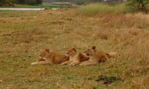 ZIMBABWE / Centralne Zimbabwe/ okolice Gweru / Antelope Park / Rodzeństwo