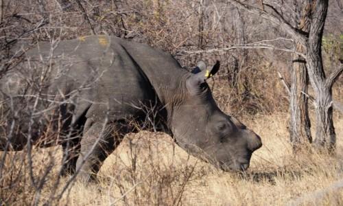 ZIMBABWE / Zachodnie Zimbabwe  / Park Narodowy Matobo Hills  / Smutno