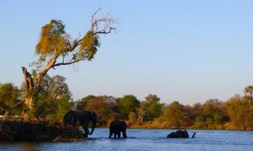 ZIMBABWE / Pół.  zachodnie Zimbabwe / Rzeka Zambezi / Na wieczorną  kąpiel całą rodziną