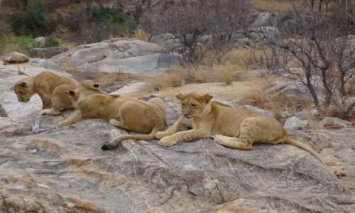 Zdjecie ZIMBABWE / Centralne Zimbabwe/ okolice Gweru / Antelope Park / Zawsze razem