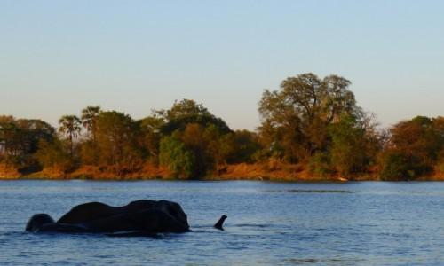 Zdjecie ZIMBABWE / Pół.  zachodnie Zimbabwe / Rzeka Zambezi/ na łodzi / W wodzie chłodniej
