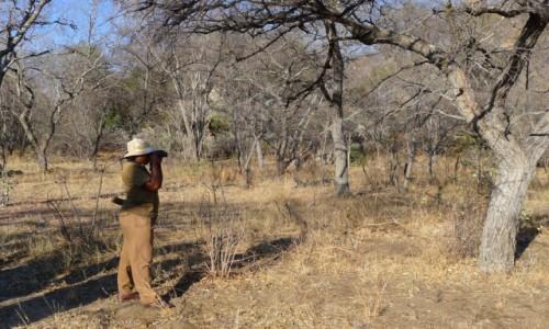 Zdjecie ZIMBABWE / Zachodnie Zimbabwe  / Matobo Hills  / Gdzie jesteś nosorożcu ?