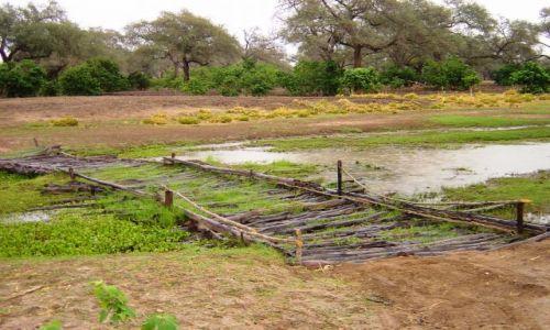 Zdjęcie ZIMBABWE / Mana Pools / droga przez busz / Most na rzece